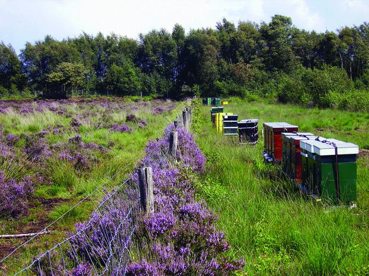 Bijenkorven op de heide