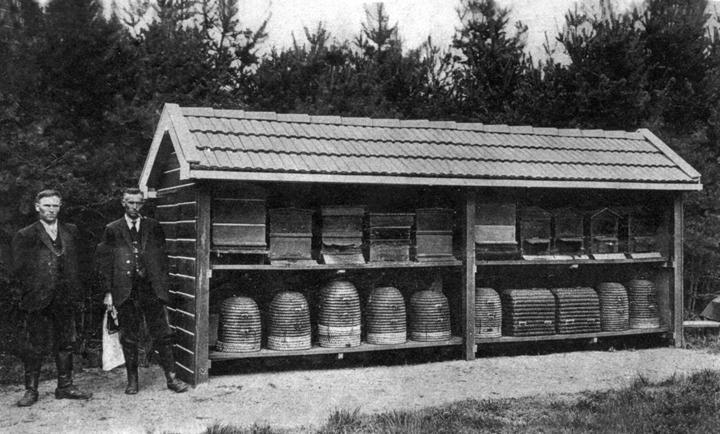 Bij Dennerode aan de Zwiggelterweg bij Hooghalen, nu Hiemstrastate, werden ook bijen gehouden.