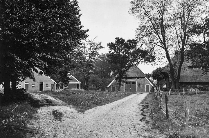 De boerderijen bij de Lippingshof, vanuit de Schoolstraat naar het oosten gezien. (Collectie R. Hoving. Uit: Spitwa(a)rk, 2006, nr. 3, blz. 6.)