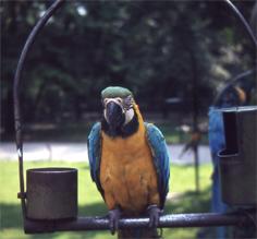 Papegaai Noorder Dierenpark Emmen